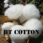 Bt Cotton makes India the top cotton producing country