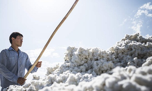 Environmental impact of cotton