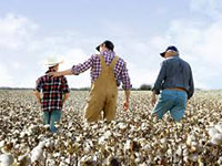 China's strategic procurement of US cotton to balance import losses