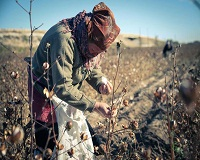 Fighting against forced labour in Turkmenistan, Uzbekistan for cotton production